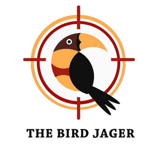 Bird Jager 1.3 APKModDownload for android