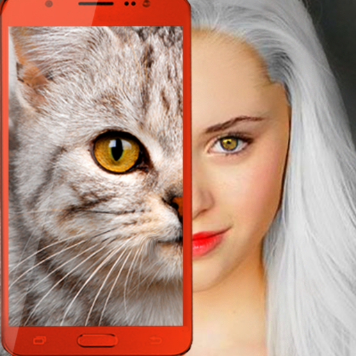 Kittens what cat are you prank 2.7 APK Mod Download for android